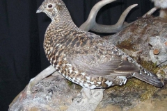 lynx-grouse2-dan-flint-tanning-and-taxidermy-phone-250-489-3020
