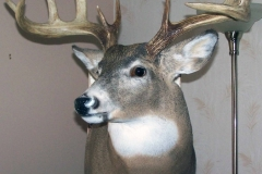 white-tail-deer8-dan-flint-tanning-and-taxidermy-phone-250-489-3020