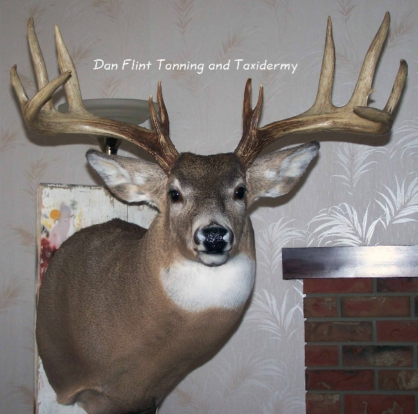 white-tail-deer7-dan-flint-tanning-and-taxidermy-phone-250-489-3020