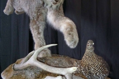 lynx-grouse3-dan-flint-tanning-and-taxidermy-phone-250-489-3020