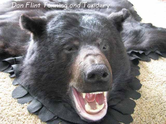 bear-rug-dan-flint-tanning-and-taxidermy-phone-250-489-3020