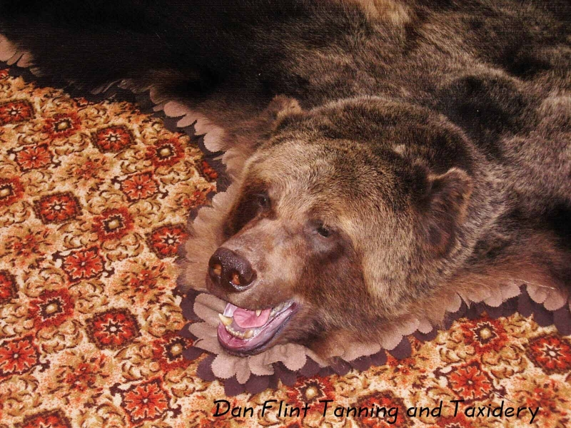 grizzly-rug6-dan-flint-tanning-and-taxidermy-phone-250-489-3020