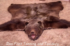 grizzly-bear2-dan-flint-tanning-and-taxidermy-phone-250-489-3020
