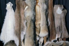deer-moose-goat-fox-linx-pelts-dan-flint-tanning-and-taxidermy-phone-250-489-3020