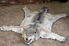 wolf-rug-dan-flint-tanning-and-taxidermy-phone-250-489-3020