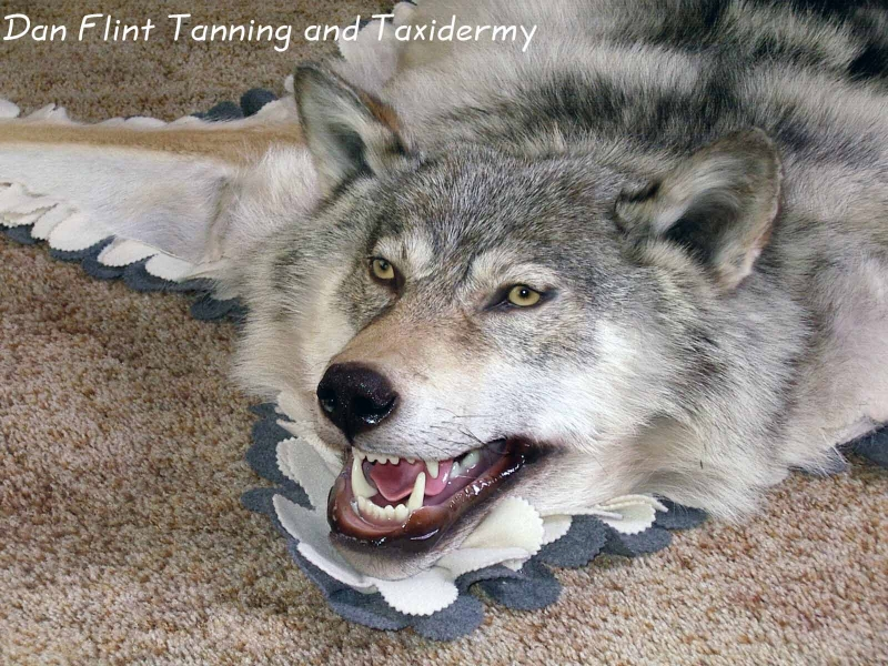 wolf-rug2-dan-flint-tanning-and-taxidermy-phone-250-489-3020